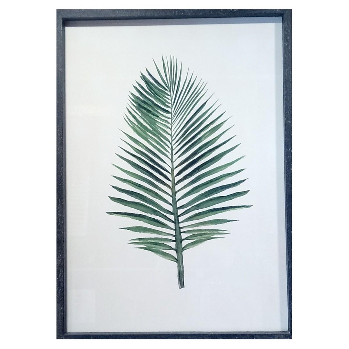 Tableau herbier feuille de palmier Phoenix roebelenii
