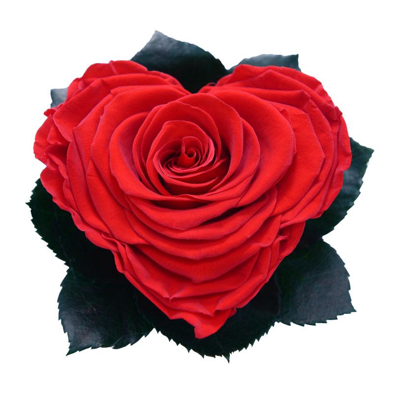 Rose éternelle rouge XXL en forme de cœur