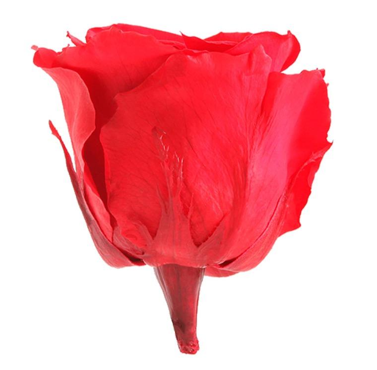 Parfum pour roses éternelles - Senteur rose de jardin