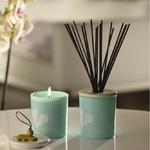 CHEZ UGO ET LEA lumière et senteur esteban orchidée blanche bouquet parfumé 2