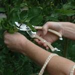 CHEZ UGO ET LEA nature et végétal esschert sécateur inoxydable 4