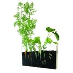 terrarium-visio-racines