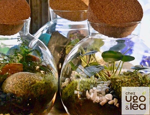 CHEZ UGO & LÉA Artisans fleuristes jardinerie urbaine terrariums plantes