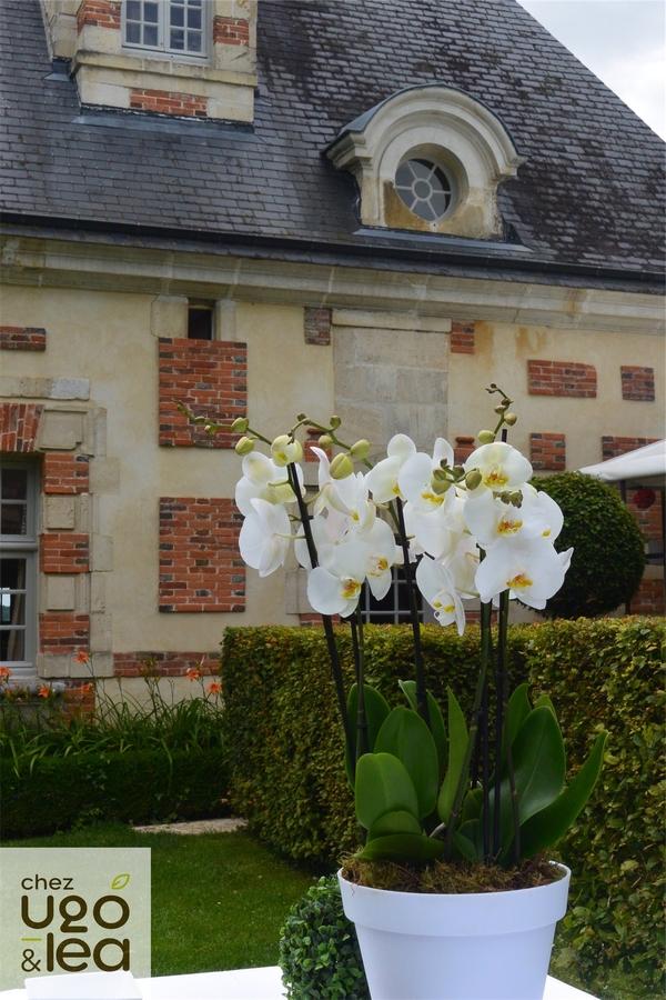 CHEZ UGO & LÉA Evénément Mariage décor garden party avec plantes orchidées