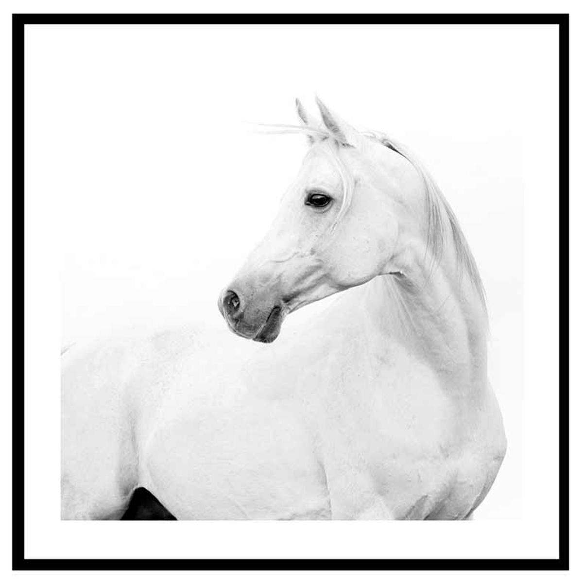 Cadre verre \'Noir & Blanc\' (cheval blanc) - 45x45 cm - [Q7657]