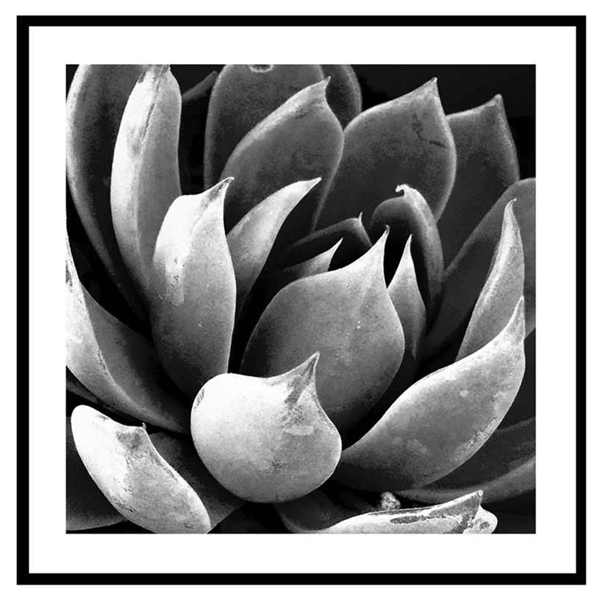 Cadre verre \'Noir & Blanc\' (plante grasse nature) - 45x45 cm - [Q7664]