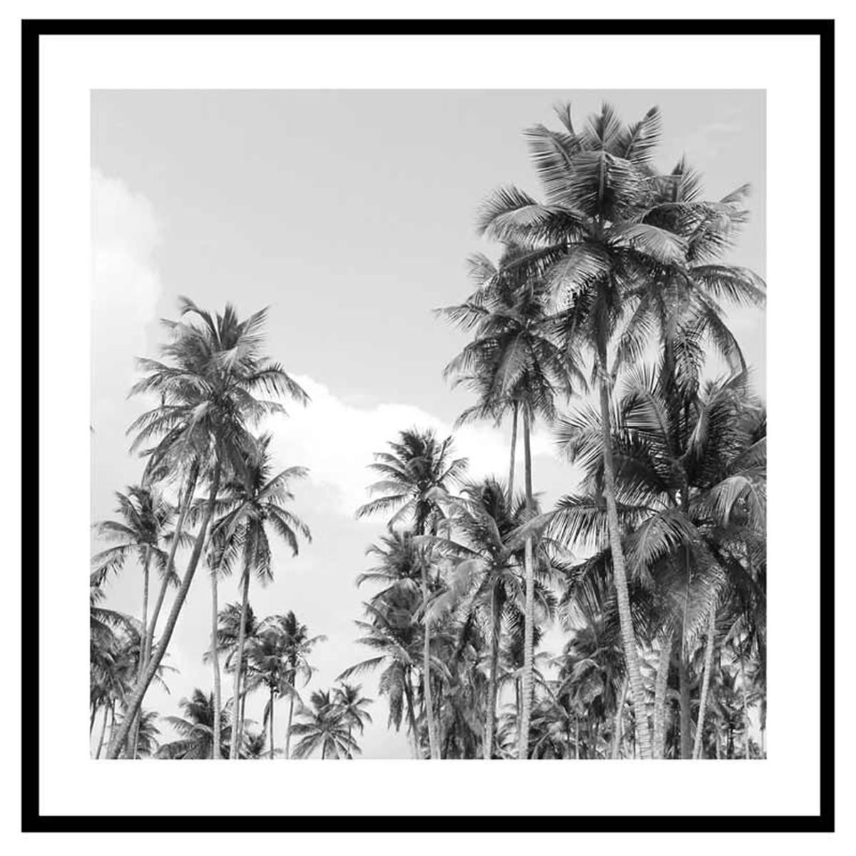 Cadre verre \'Noir & Blanc\' (palmiers ancestraux) - 45x45 cm - [Q7663]