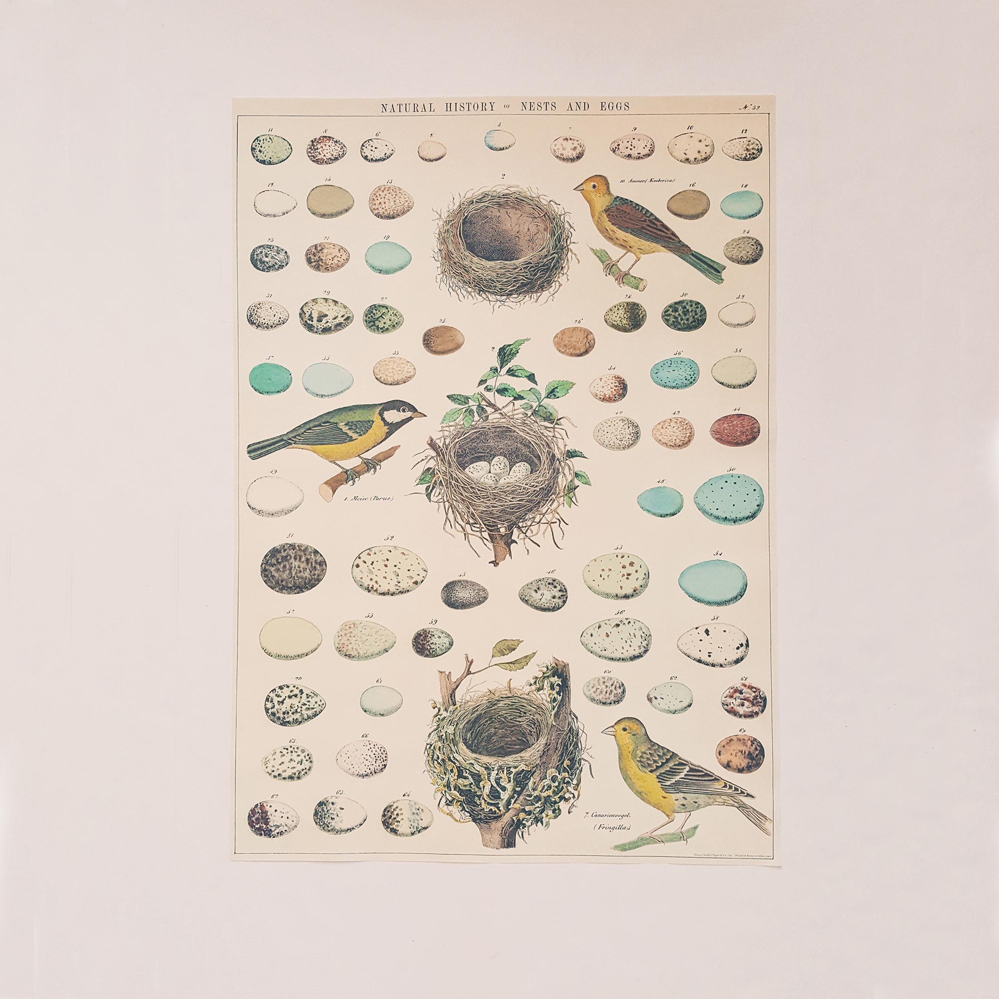Affiche vintage oeufs et nids