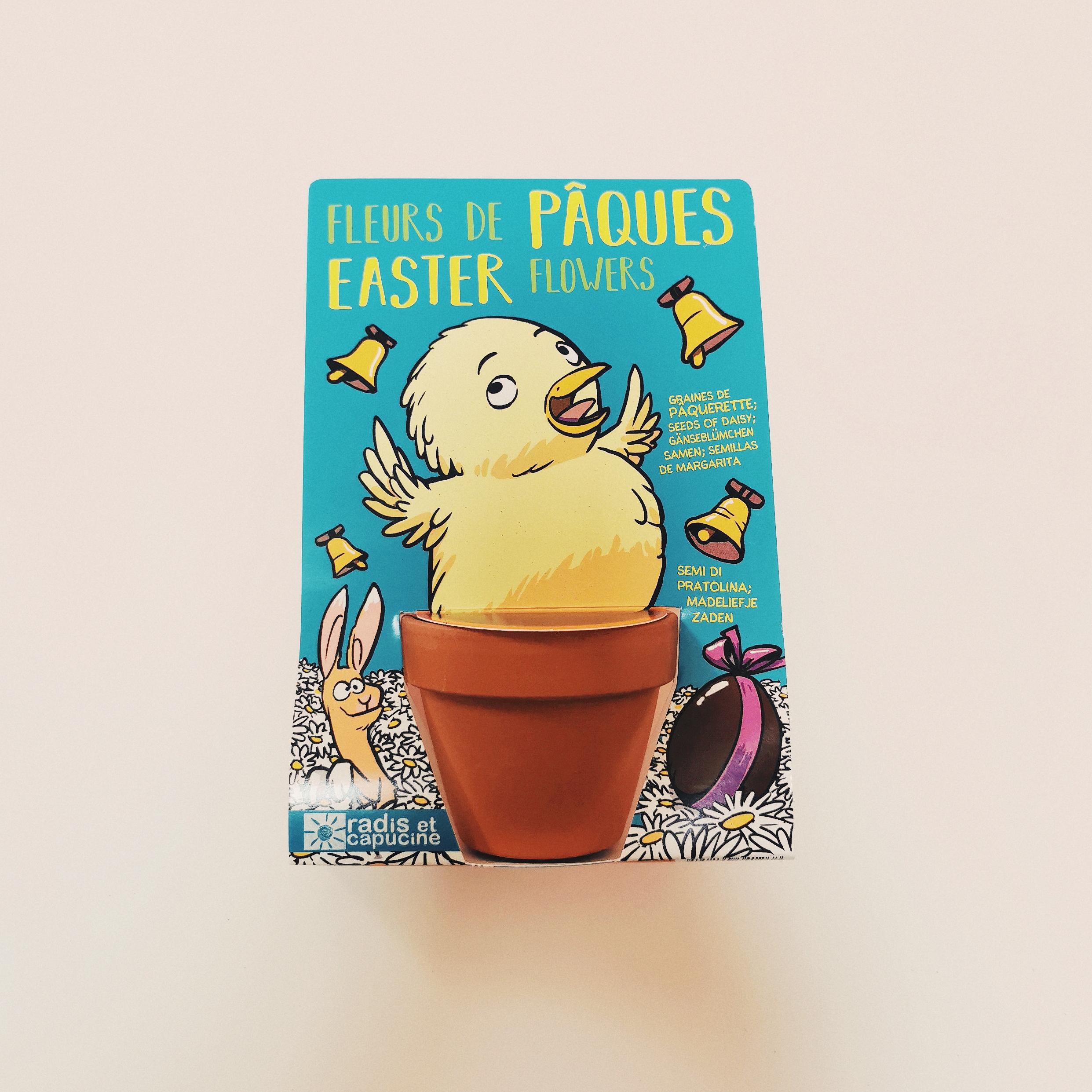 Poussin de Pâques et ses paquerettes à semer
