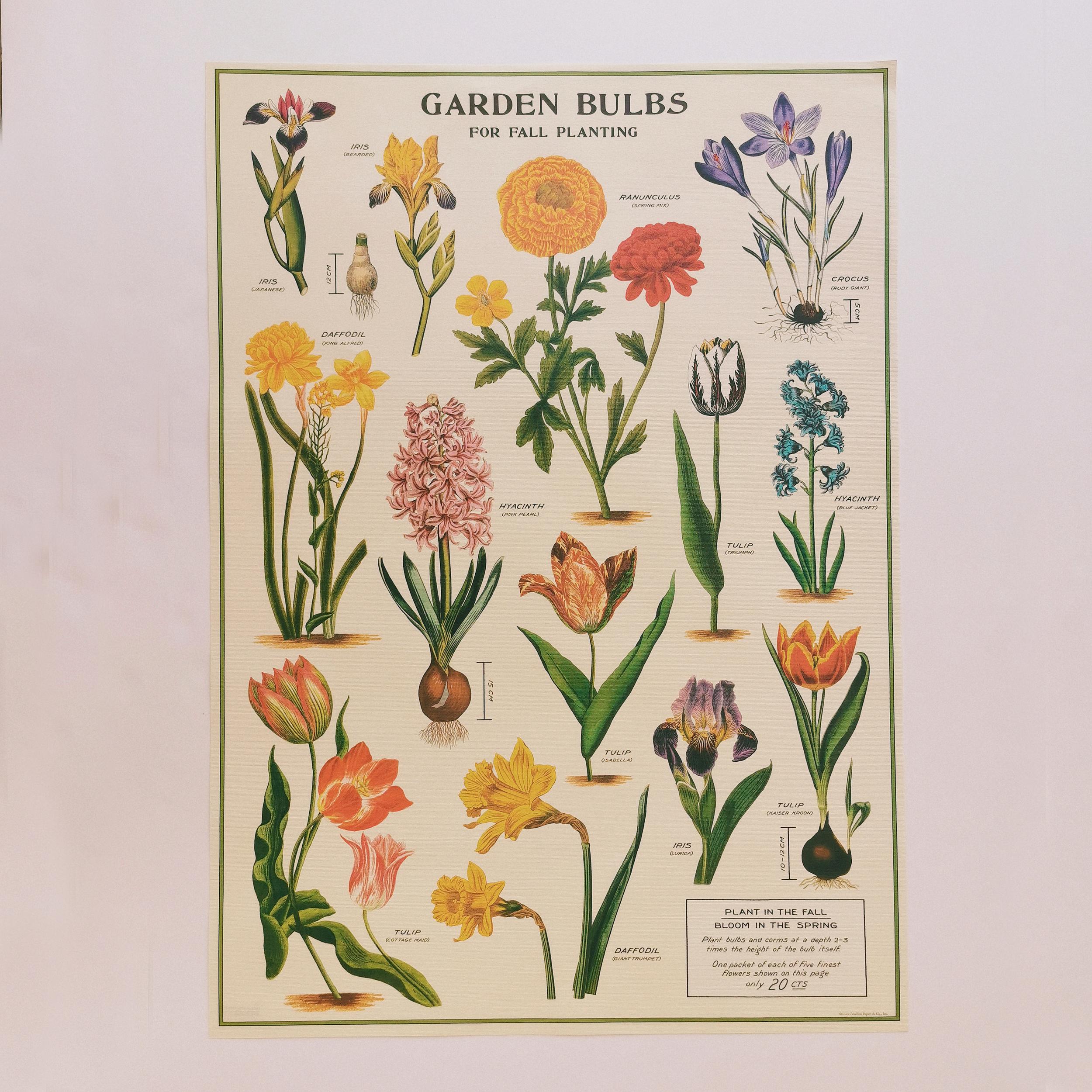 Affiche Jardin de bulbes
