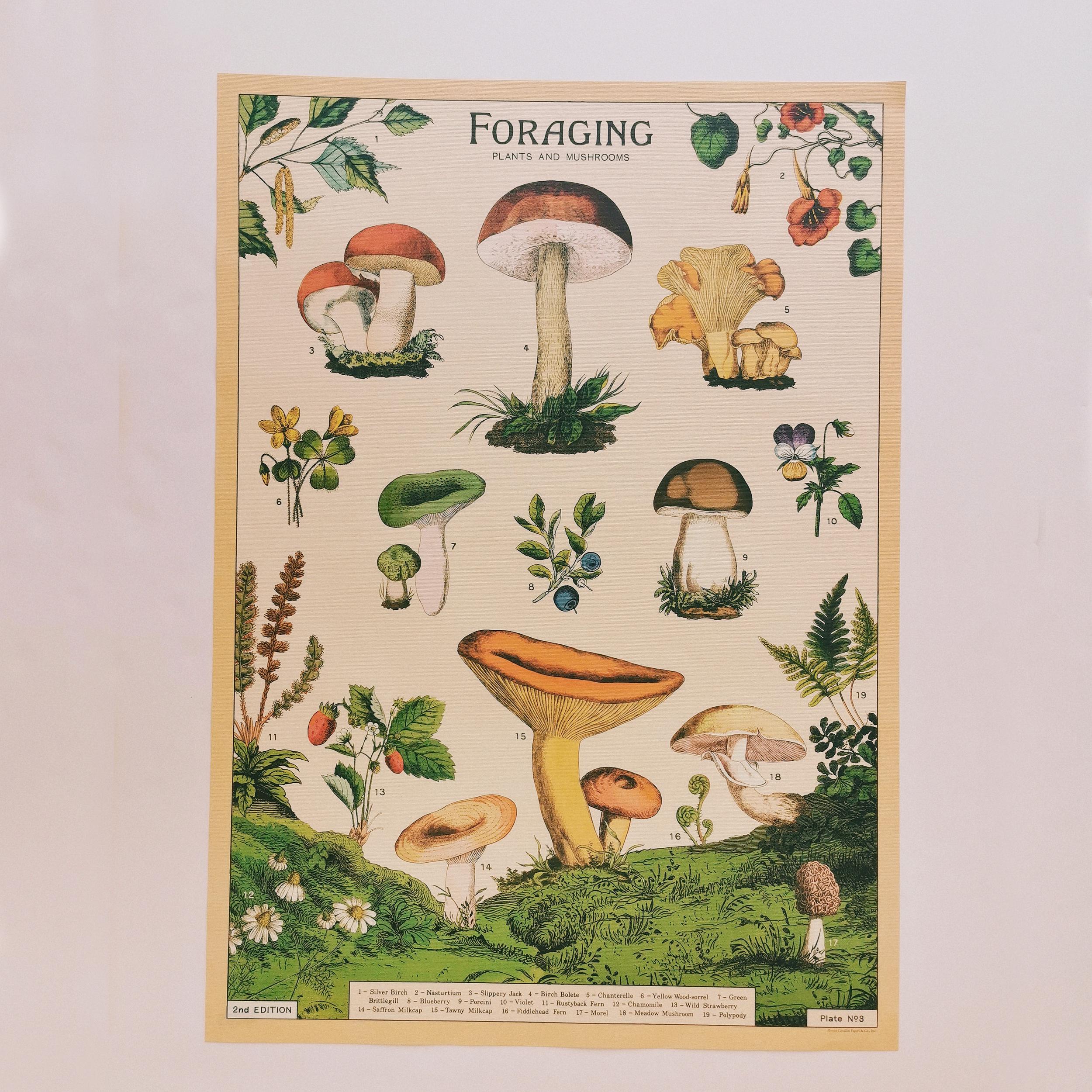 Affiche vintage champignons comestibles