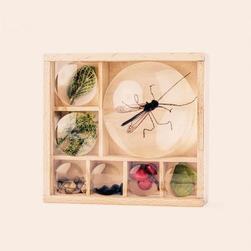 Boîte loupe à insectes en bois