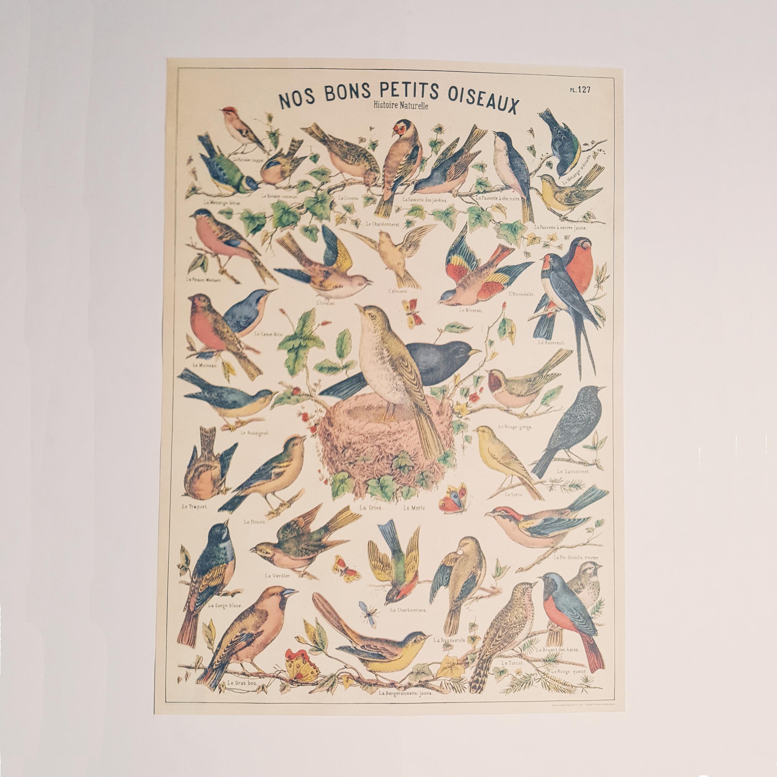Affiche vintage nos bons petits oiseaux