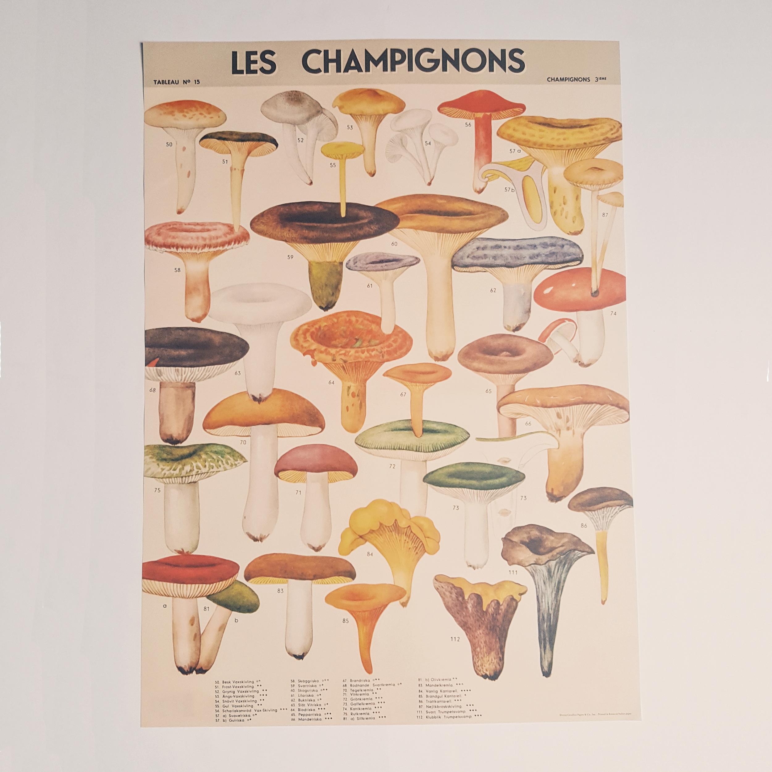 Affiche vintage champignons