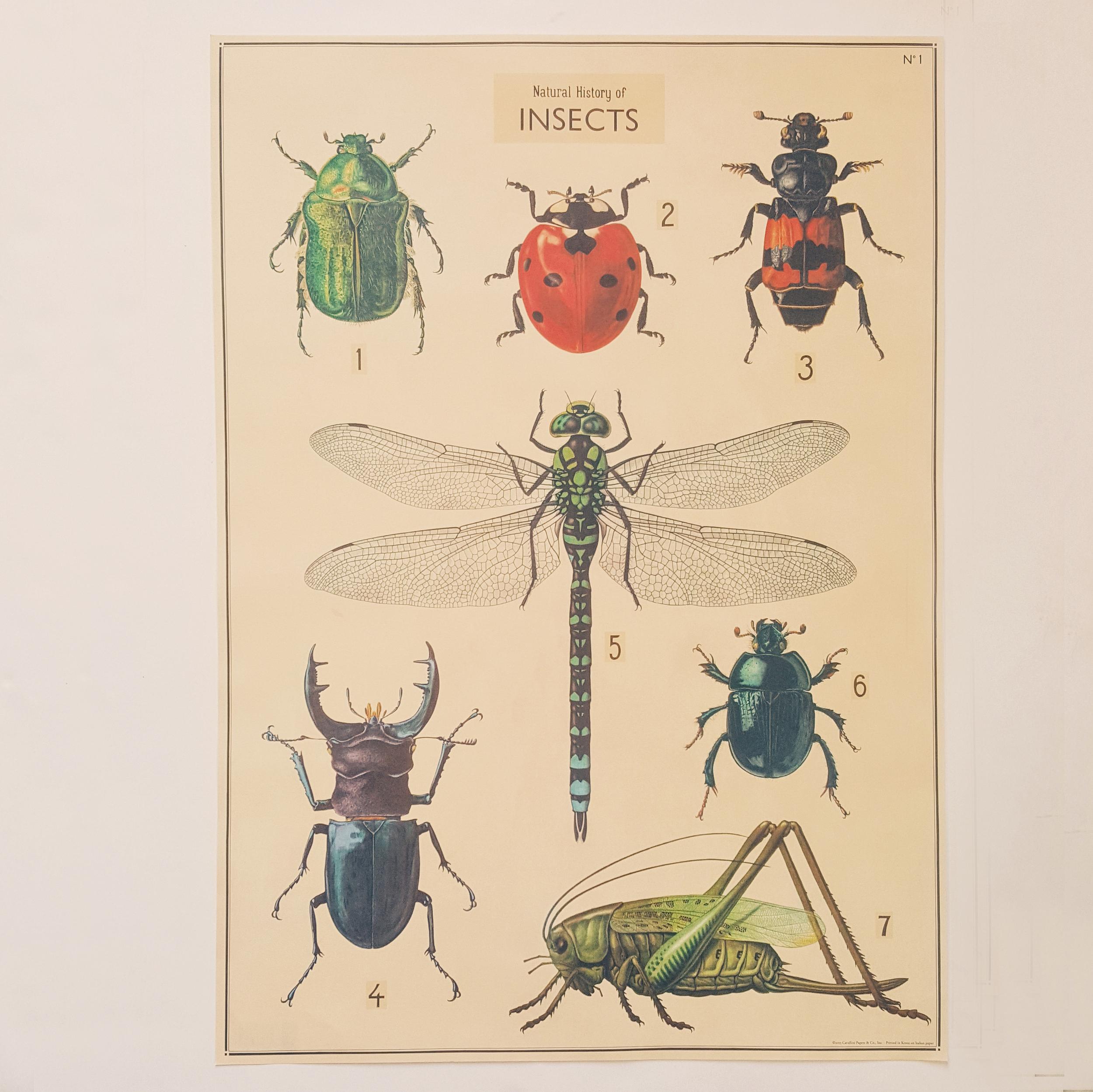 Affiche vintage galerie d\'insectes