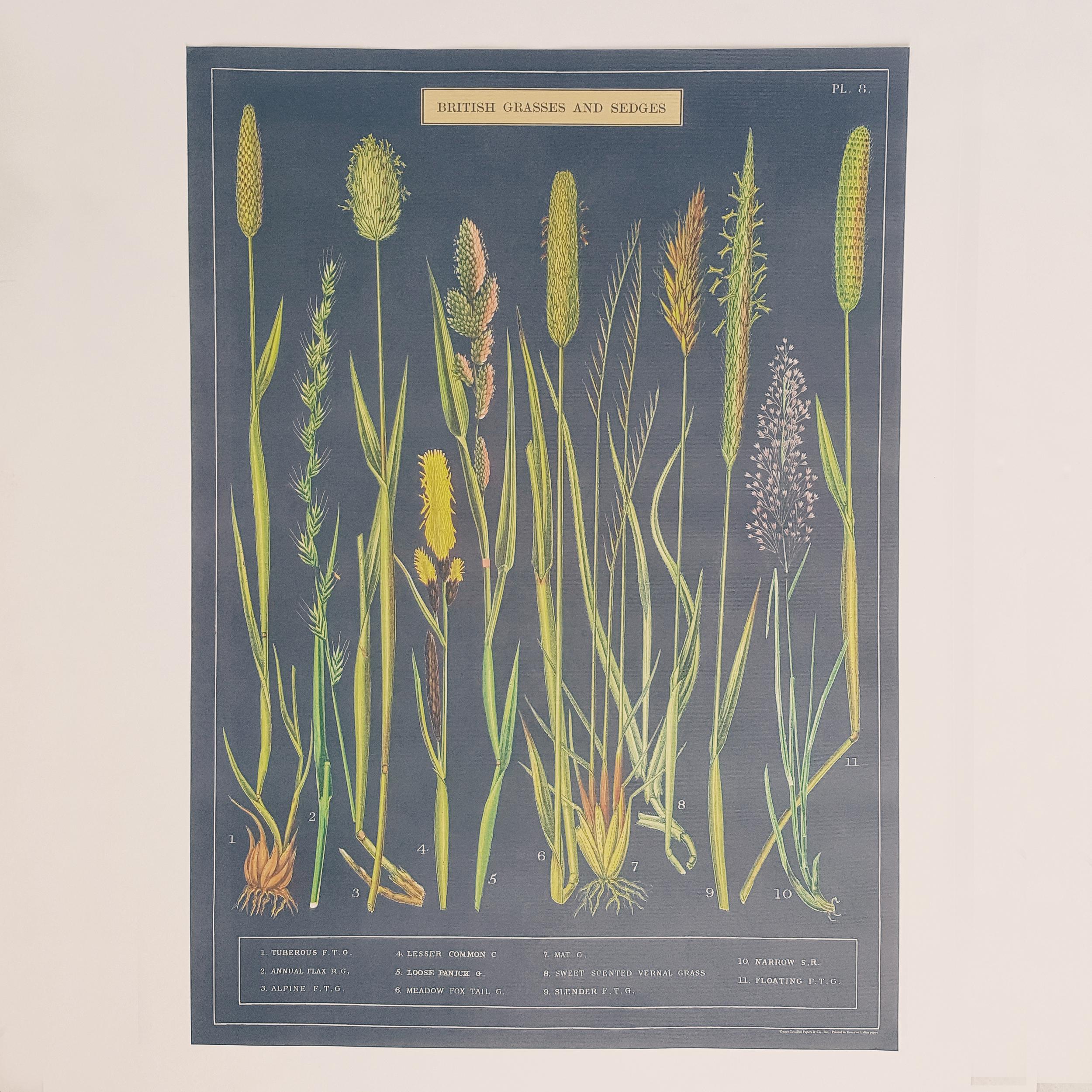 affiche vintage herbes des jardins