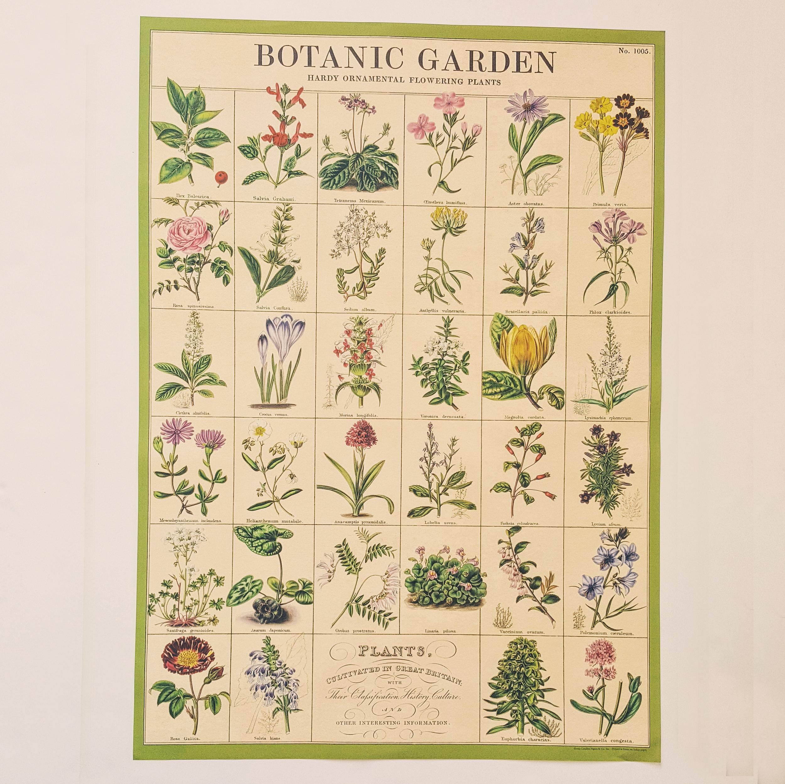 Affiche vintage jardin botanique
