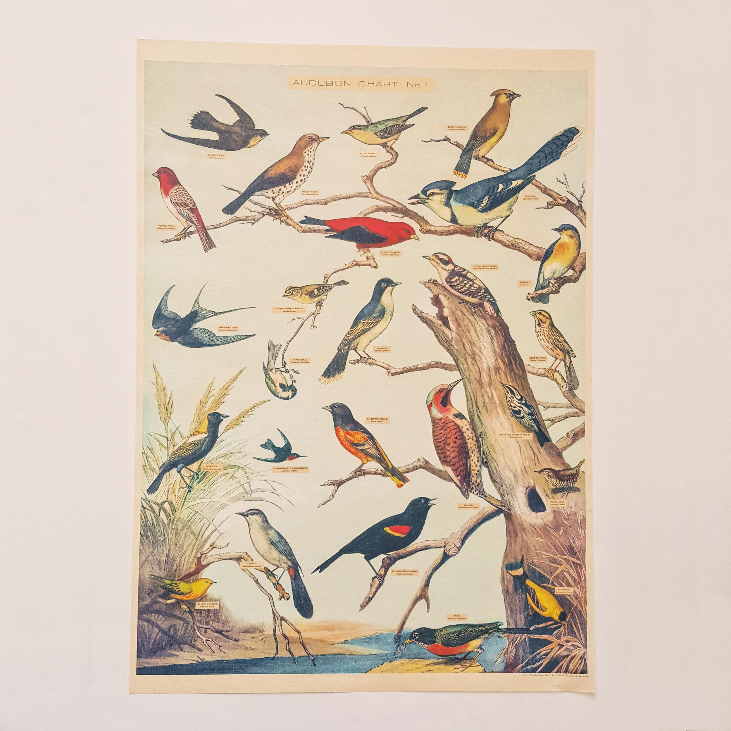 Affiche vintage oiseaux par Audubon