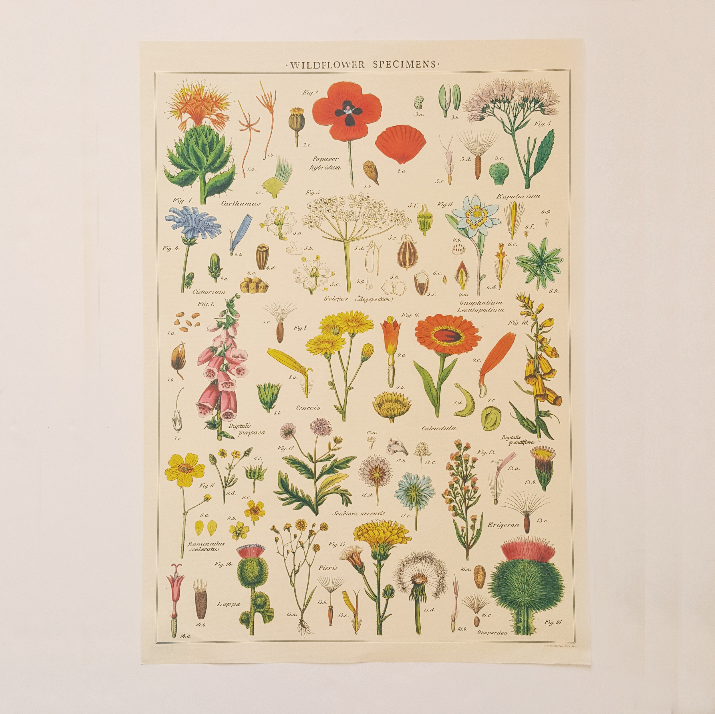 affiche vintage fleurs sauvages