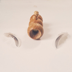 appeau en bois mouette