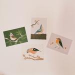 cartes postales oiseaux