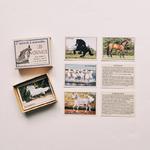 cartes races de chevaux