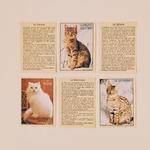 connaître les races de chats