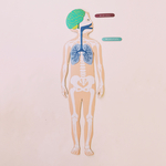 fabrikanatomie aimants sur le corps humain