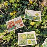 cartes fleurs randonnées