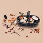 panier en rotin et champignons bois