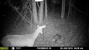 Vision nocturne de la caméra de chasse