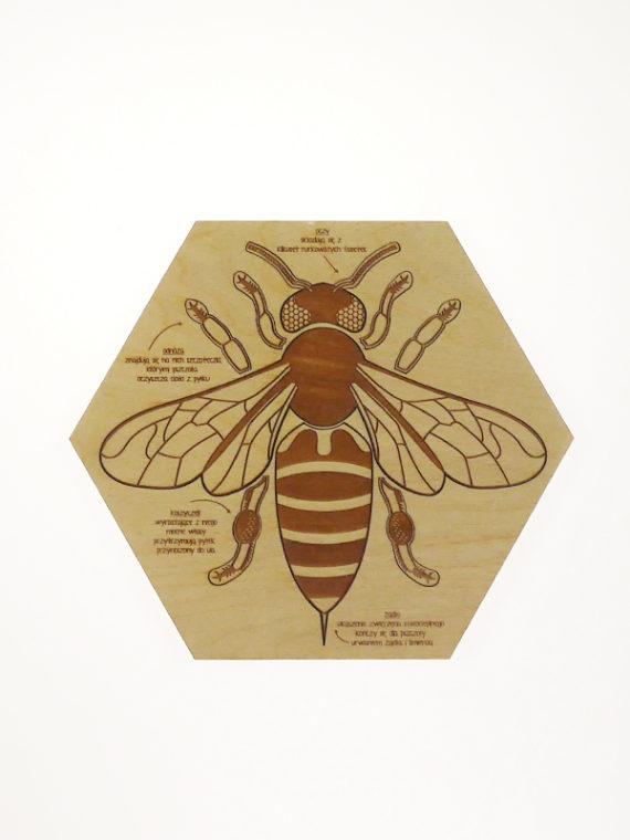 Puzzle en bois Anatomie de l\'abeille Stuka Puka