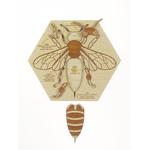 Puzzle en bois Anatomie de labeille Stuka Puka