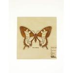 Puzzle multicouches le Cycle de vie du papillon Stuka Puka 2