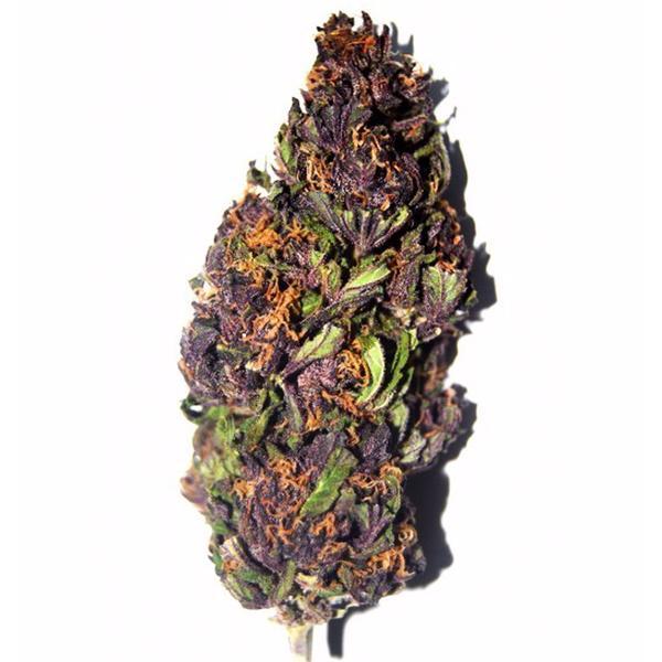 Purple Haze outoor 9%