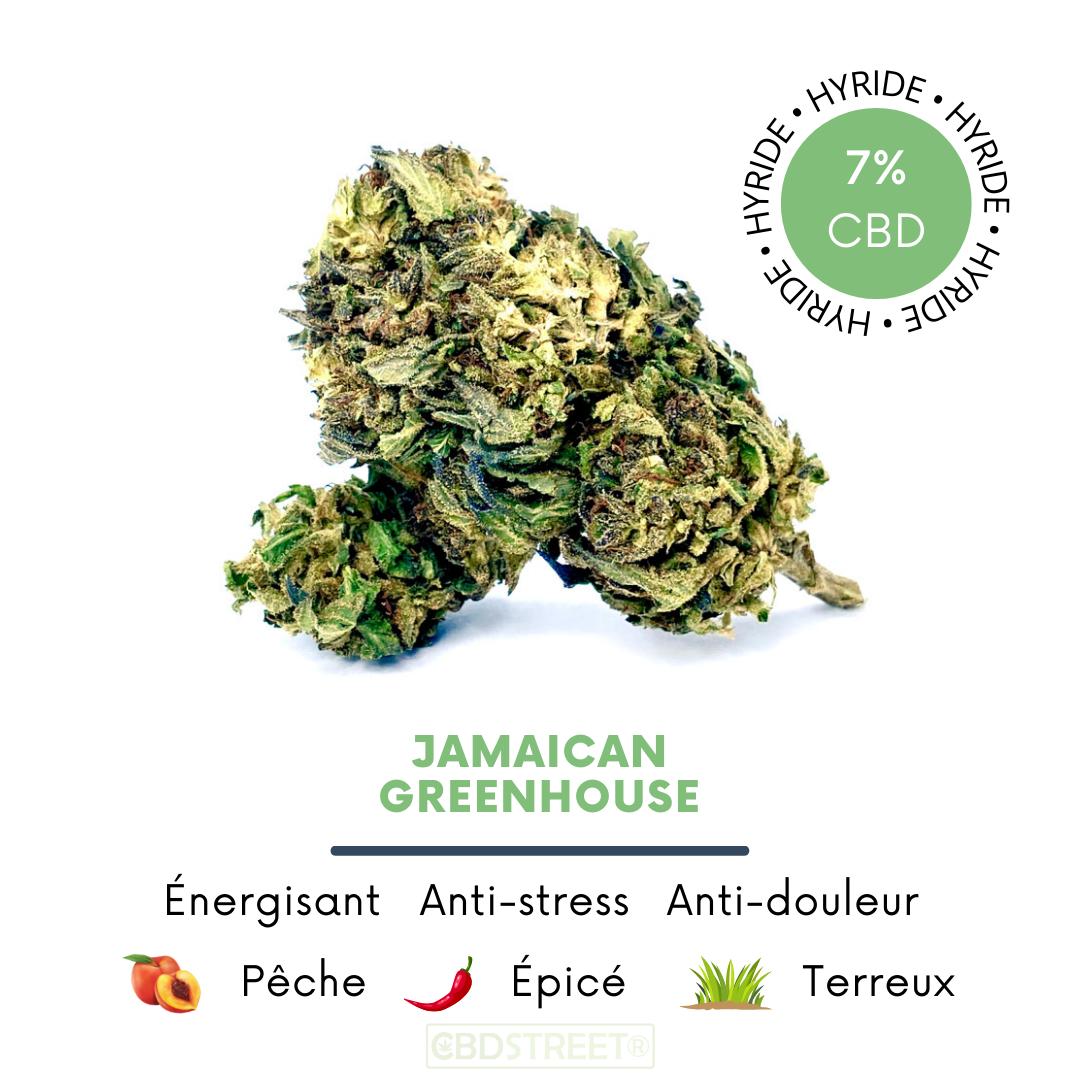 Jamaïcain Dream CBD greenhouse 7%