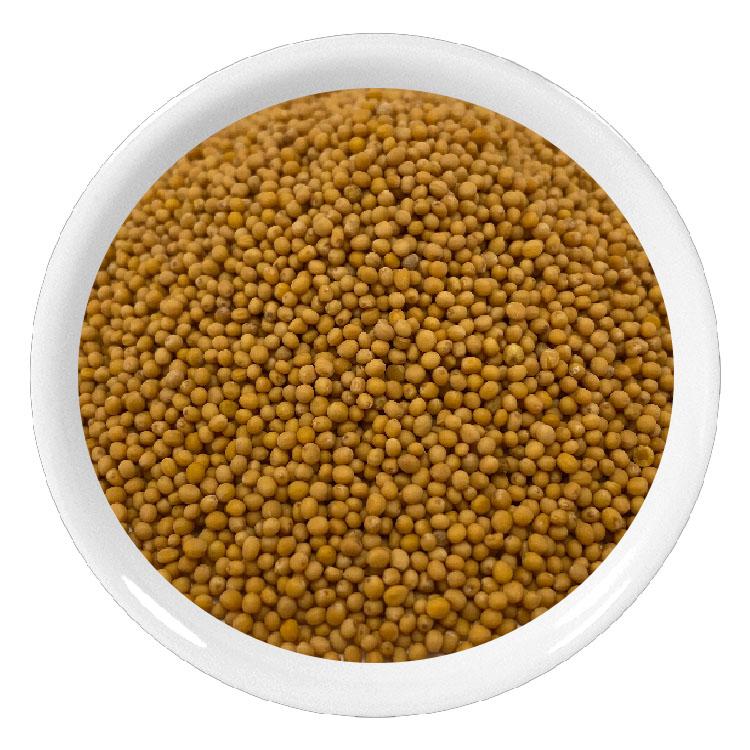 Moutarde jaune graines