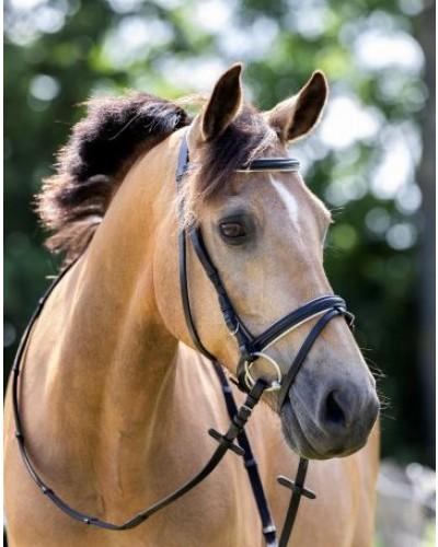 Bridon basic HB Horse