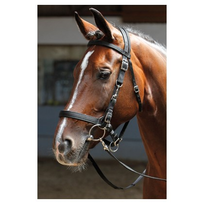 Bridon-licol Harry\'s Horse