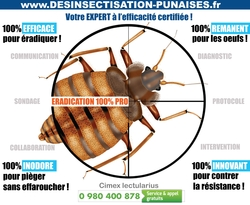 Traitement-punaises-de-lit-pro
