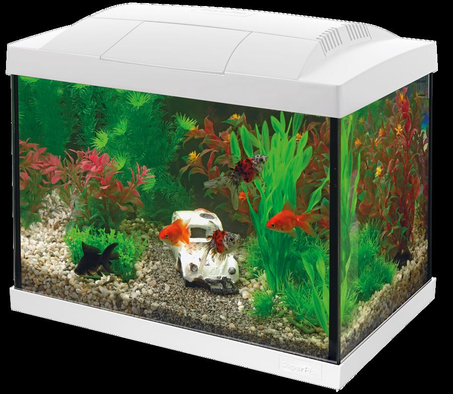 SuperFish Aquarium Start 20 Goldfish Kit - Blanc