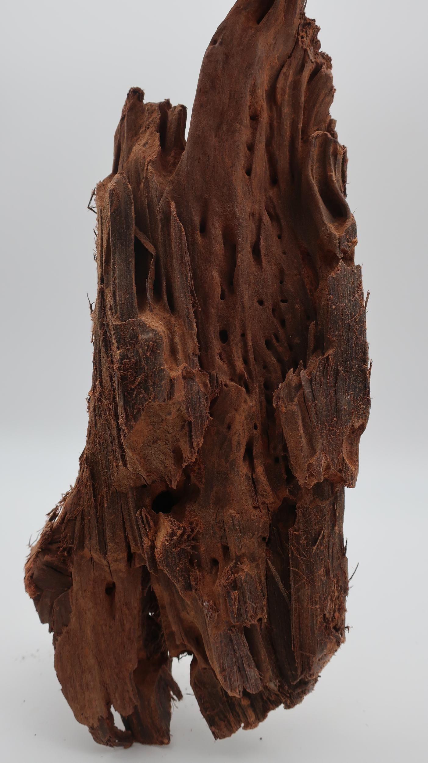 RACINE MANGROVE XL 48-60cm