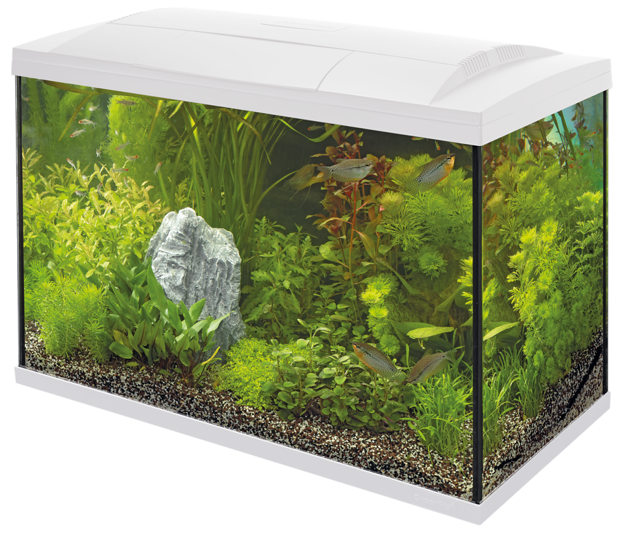 SuperFish Aquarium Start 100 Tropical Kit - Blanc