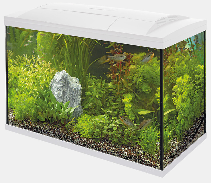 SuperFish Aquarium Start 150 Tropical Kit - Blanc