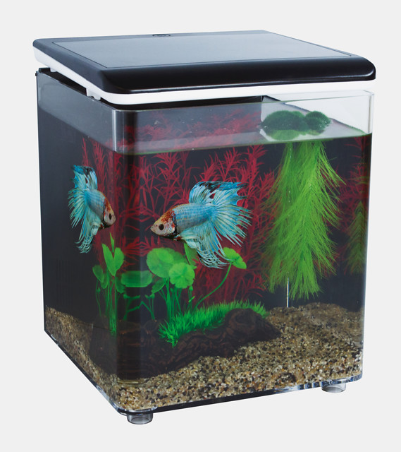 SuperFish Aquarium Betta 8 Kit - Noir