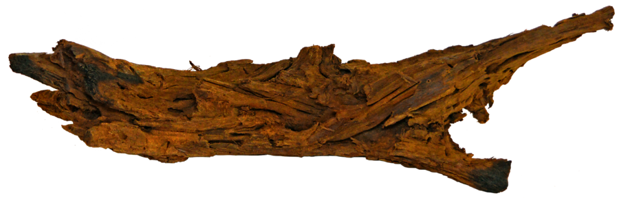 RACINE MANGROVE S  18-28cm