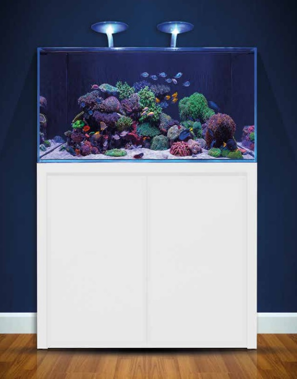 BLUE MARINE REEF 350 BLANC KIT COMPLET