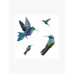colibri-sticker