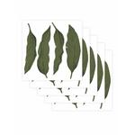 leaf-set-de-5-planches-papermint3