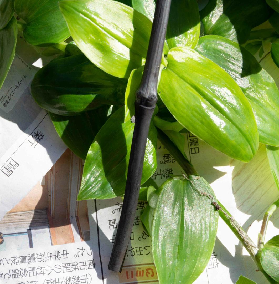 Brindille Zero - charbon de bambou Takesumi